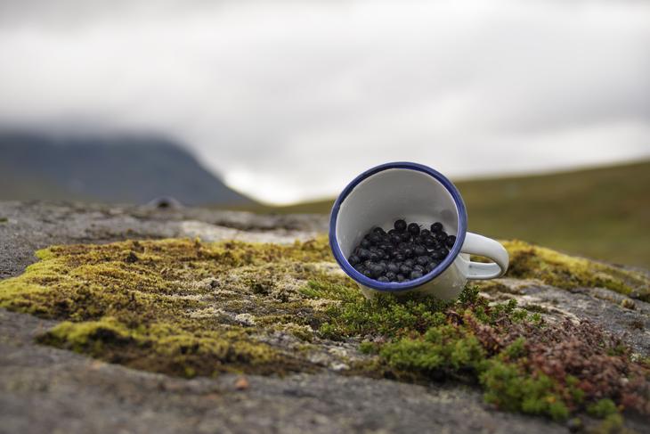 Kopp med blåbær