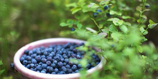 Skål med blåbær